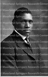Paul Robeson 1918 Formal portrait p. 18 Rutgers university junior year (courtesy Paul Robeson Jr)